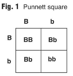 Dominant And Recessive Alleles Chart Fig. 1