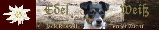 Edel Weiss Jack Russell Terrier